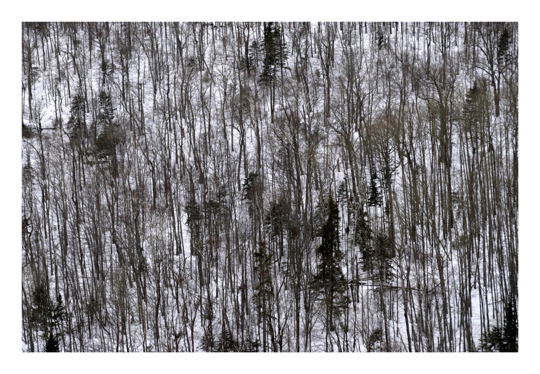 Lucien Duhamel - La forêt